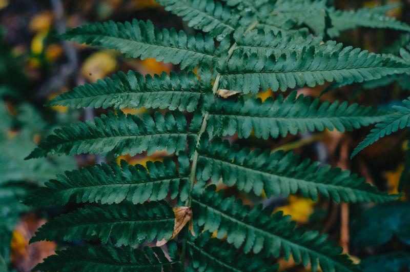 Fern leaf in a dark forest