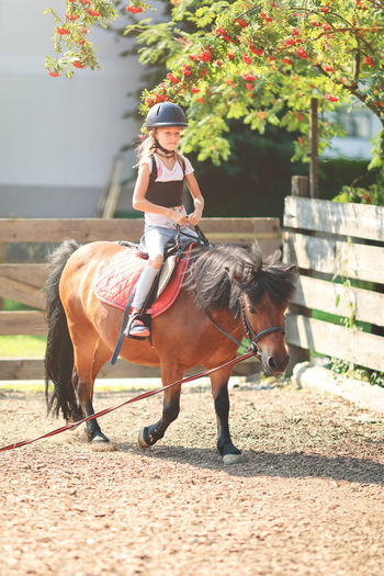 Young girl having riding lesson on a pony Animal Wildlife Domestic Domestic Animals Herbivorous Horse Horseback Riding Livestock Longe Lesson Mammal One Animal One Person Pets Real People Riding Riding Area Riding Lesson Vertebrate Young Girl