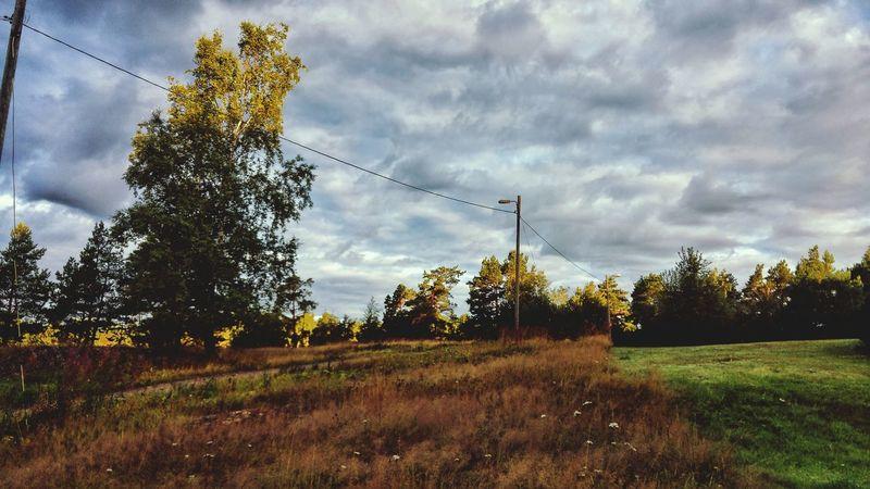 Aurinko on vasta herännyt ©️JaniVauhkonen Tree Cloud - Sky Growth No People Outdoors Day Sky Nature Spraying Grass LGG4 JaniVauhkonen