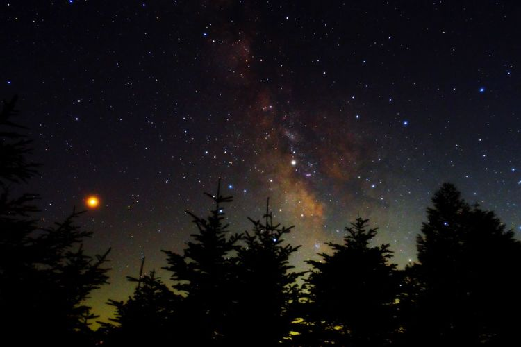 Fujifilm XF16mmF1.4 Xpro1 EyeEm Nature Lover Milky Way Night Star - Space Space Sky Astronomy Tree Beauty In Nature Nature