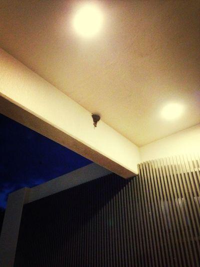 宿泊先のホテルの入口にツバメの巣を発見