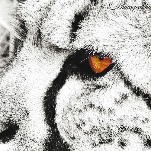 A cheetahs eye Cheetah Bigcats Bigcat Eyes Closeupshot Photography Zoo