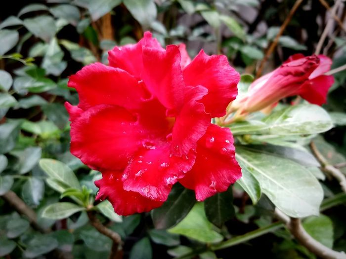 Beauty In Nature Close-up Day Flower Flower Head Flowering Plant Focus On Foreground Fragility Freshness Leaf No People Outdoors Plant Plant Part Red