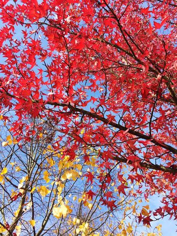 Red Nature Low Angle View Tree Beauty In Nature Growth Day No People Outdoors Close-up Sky