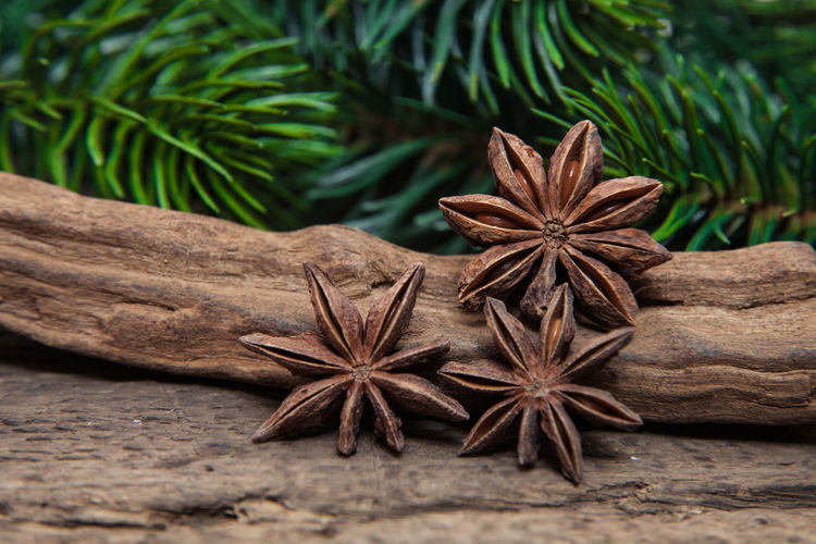 Close-up of star anise on wood by plant