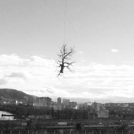 Tree Learn To Fly Up In The Air Flying Objects Tree And Sky Black And White Collection  Black And White Photography U.F.O.