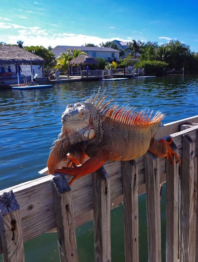 Vacation in Florida : Grassy Key / Florida Keys , USA ?? Dolphin Research Center ? Tadaa Community Tadaa