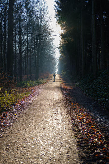 Man walking on footpath amidst trees in forest
