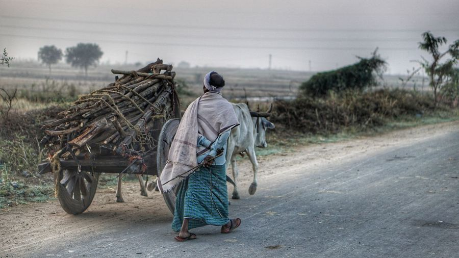 A Rural Scene Rural Scene Carrying Outdoors Transportation Landscape Day People Only Men One Man Only Adults Only Adult Working One Person Rural Landscape Ruralphotography Rural Scenes Nwin Photography Scenics EyeEm Villages Bullock Cart Adult Male Walking Village Road Rural Life