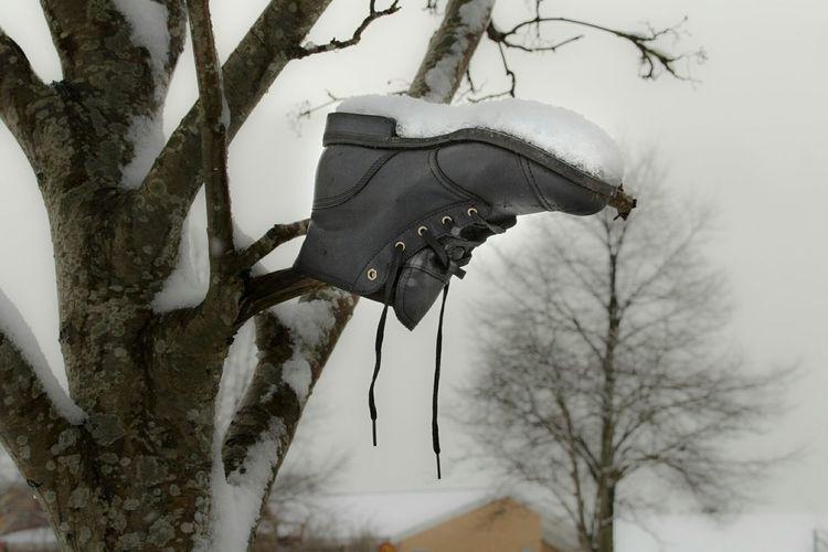Abandoned boot. Sweden Skåne Boot Tree Winter