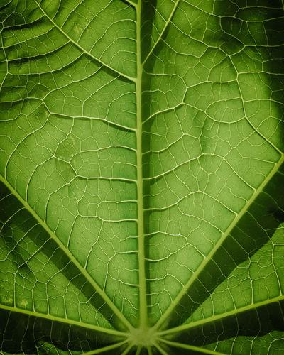Full frame shot of raindrops on plant leaves
