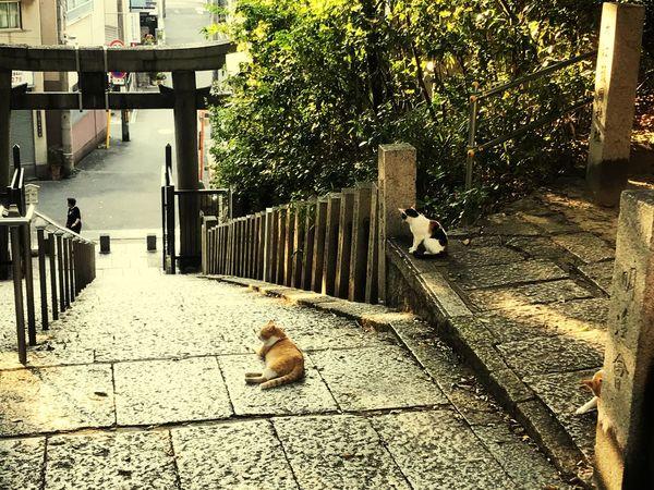 夕焼けニャンニャン 大江神社 天王寺 猫
