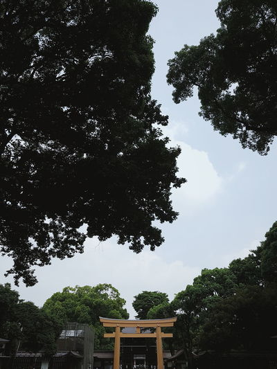 Tree Low Angle View Architecture No People Sky Outdoors Built Structure Day Branch Nature Shrine Meiji-Jingu Meiji Shrine Park Tokyo Japan Japanese  Harajuku Yoyogi Park Yoyogi meiji jingu temple shrine view in tokyo japan Gate Shrine Gate