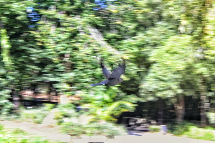 Blurred motion of bird flying in the forest
