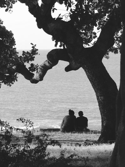 Apreciar Water Two People Togetherness Silhouette Nature Beach Day Real People Sea Outdoors Sitting Tree Beauty In Nature Sky Black And White Reflection Protection Love