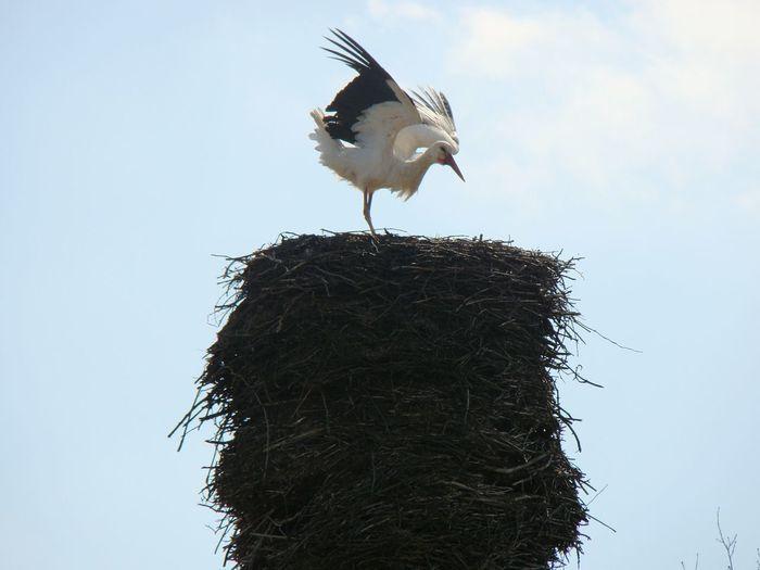 Bird Stork Socket Spring Latvia