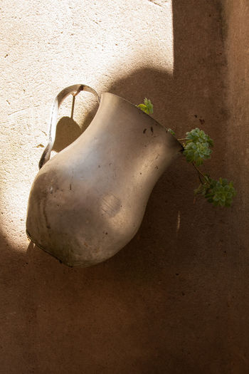 Close-up of plant in jug