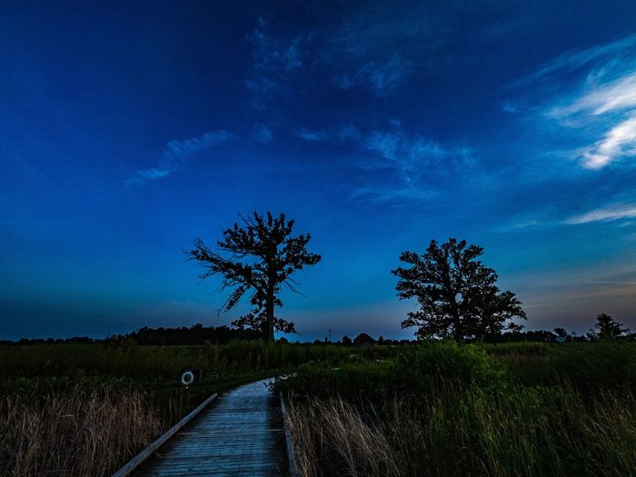 Sky Landscape Nature Cloud - Sky Tree Grass Blue Field Tranquil Scene Beauty In Nature Outdoors The Way Forward Tranquility Growth No People Scenics Day Water