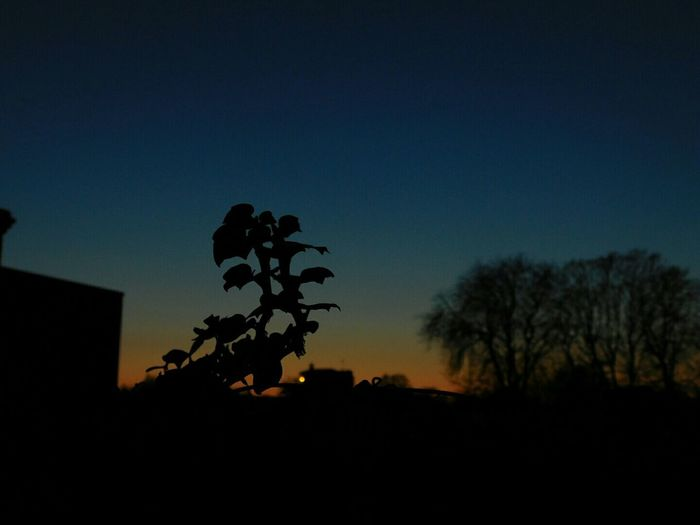 Taking Photos Check This Out Nikon L840 Silouette & Sky Beautiful Sunset Norwich Nighttime Beckons Single Bokeh Orange Meets Blue Sky