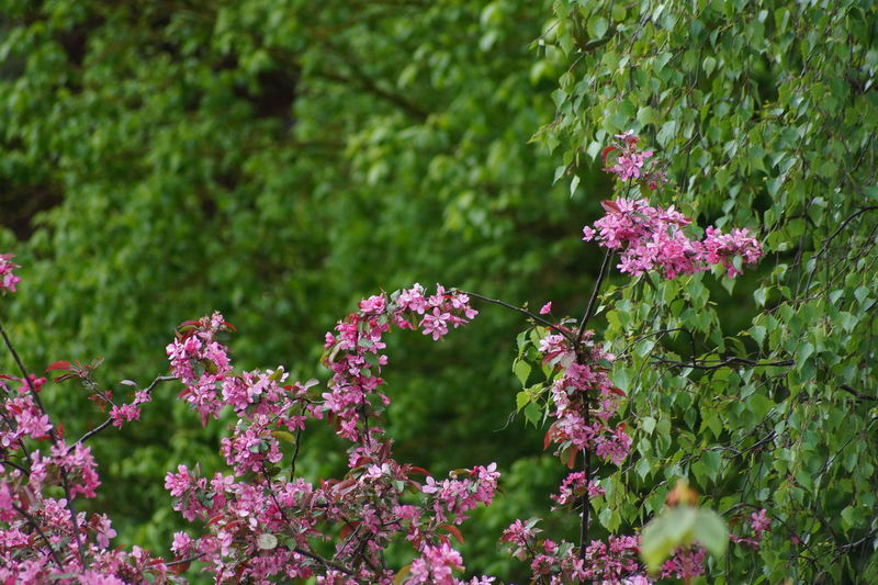 Beauty In Nature Freshness Green Color In Bloom Nature No People Outdoors Pink Color