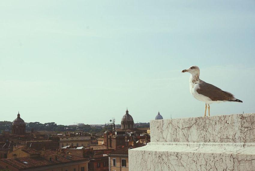Altare della Patria Rome Bird Photography Altare Della Patria National Monument To Victor Emmanuel Ⅱ