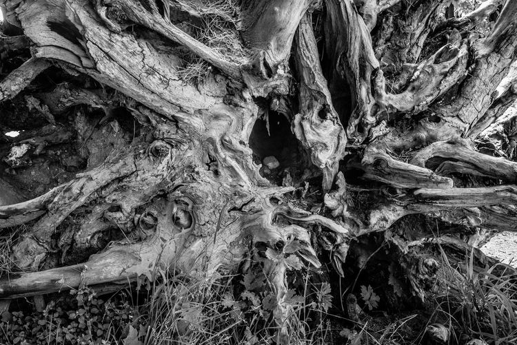 Full Frame Tree No People Root Backgrounds Nature Plant Pattern Textured  Tree Trunk Trunk Growth Day Plant Part Land Close-up Abstract Environment Forest Outdoors Bark