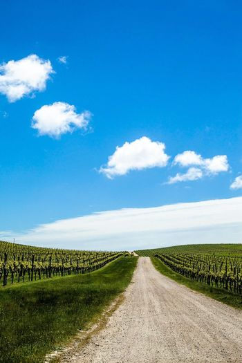 Between The Vines Nature Landscape Cloud - Sky Outdoors Sky vineyard