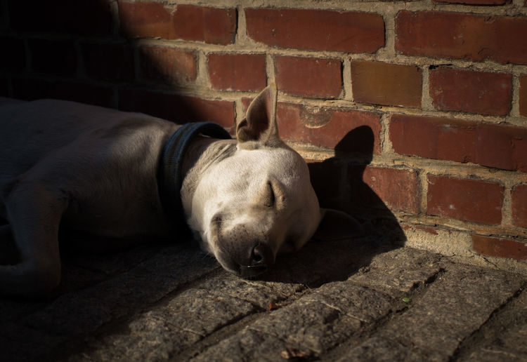 A street dog relaxing on the street Animal Themes Brick Wall Close-up Day Domestic Animals Lying Down Mammal No People One Animal Outdoors Relaxation Sleeping Street Dog Streetphotography The Street Photographer - 2017 EyeEm Awards