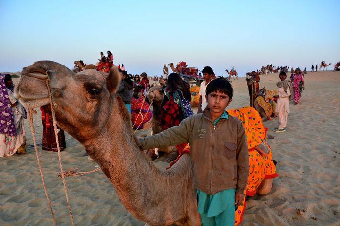 Service Animals Animals Rajasthan Travel Photography NikonD7100 Carmel Jaisalmer Thar Desert