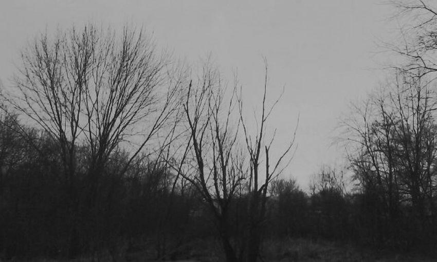 Backwoods Woods Black White Gray