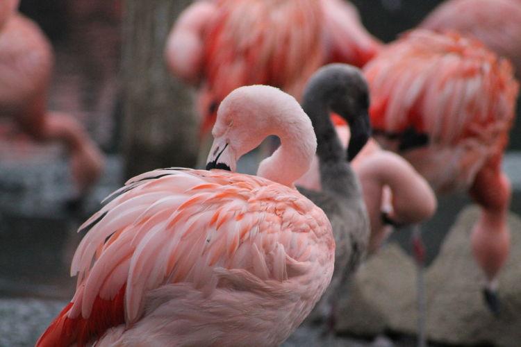 Close-up of birds