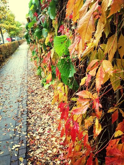 Colors Of Autumn Walking Around Hello World