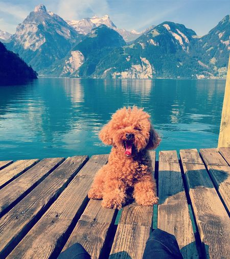 One Animal Dog Mountain Pets Water Lake Animal Themes Cute Pets Yawning Pier Outdoors Beauty In Nature Day Nature Mountain Range Sitting Sky Scenics No People EyeEmNewHere Switzerland Idyllic Scenic Scenery Cute EyeEmNewHere