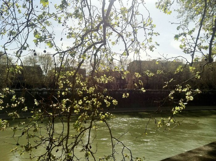 Tiber river, spring and positive outlook