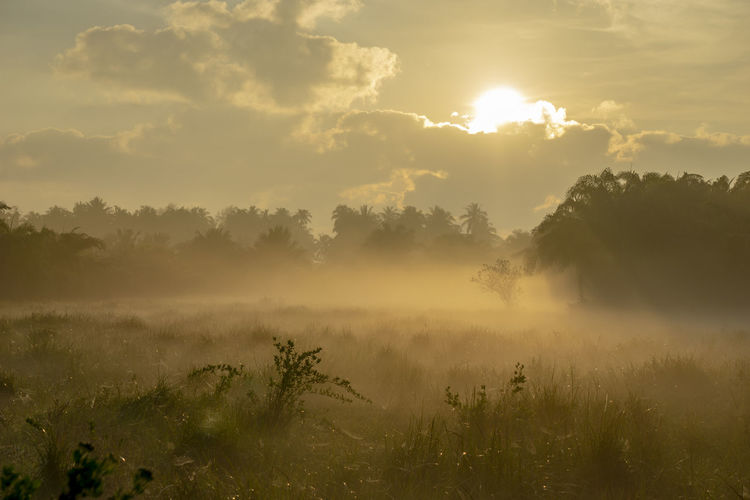 Fog over the grass In the morning Nature along the way in Chumphon Province Plant Sky Tree Tranquility Scenics - Nature Tranquil Scene Fog Beauty In Nature Cloud - Sky Sunset Growth Land Non-urban Scene Nature Idyllic Environment Landscape No People Field Outdoors Hazy