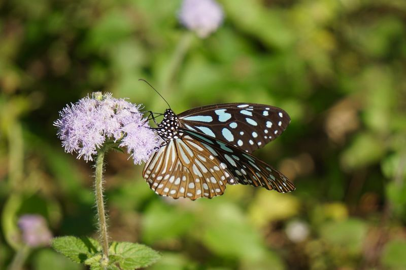 Insect Invertebrate Animal Wildlife Animal Wing Animals In The Wild Animal Themes One Animal Beauty In Nature Butterfly - Insect