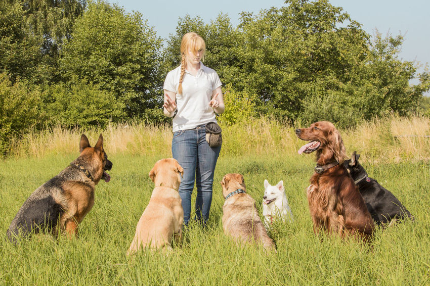 A group of dogs listen to the commands of the dog trainer Adult Blond Hair Casual Clothing Day Dog Dog Trainer Domestic Animals Grass Group Of Animals Mammal Mature Adult Mature Women Nature One Mature Woman Only One Person One Woman Only Only Women Outdoors Pets Sitting Women
