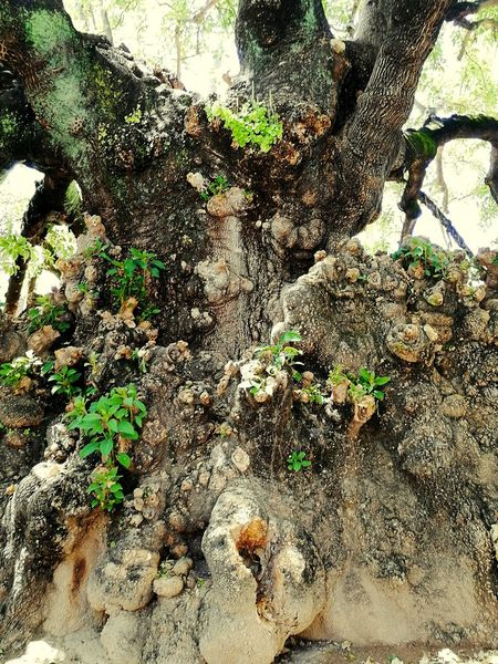 Tree Green Plant Life Growing Tumor LoveNature Backgrounds Full Frame High Angle View Beach Close-up Surface Tree Trunk Greenery