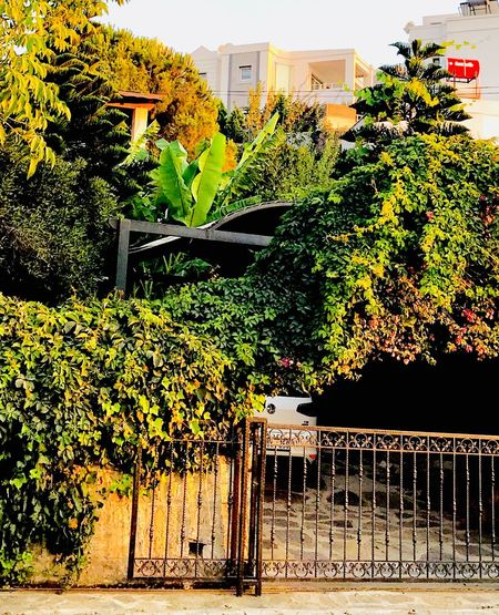 Built Structure Architecture Plant Building Exterior Tree Nature No People Growth Building Day Sunlight Outdoors Fence Barrier Creeper Plant Green Color Boundary Ivy Residential District Sky