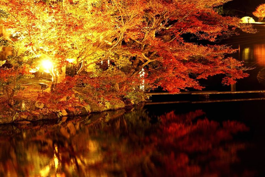 The Architect - 2016 EyeEm Awards Reflection Camera Autumn Leaves Autumn Autumn Colors Red 日本 岡山 紅葉 反射