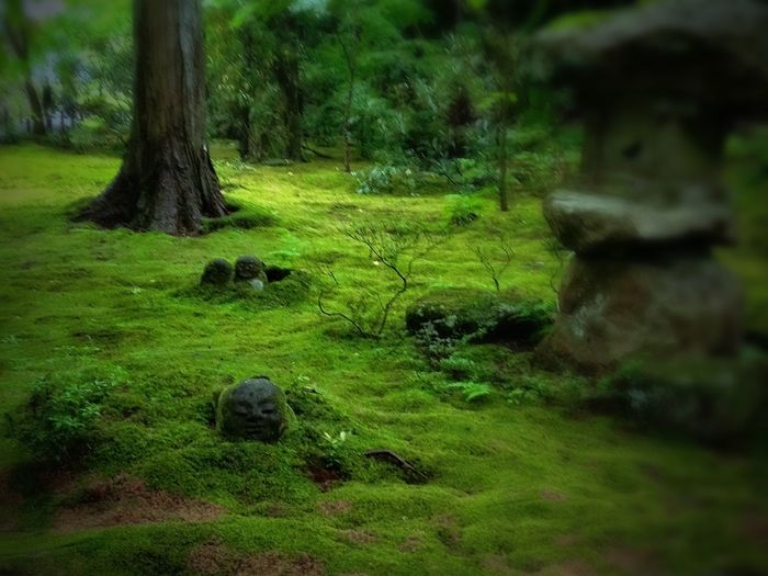 Moss 大原 Kyoto Ohara Iphonephotography 4s Ultimate Japan Colour Of Life Color Palette