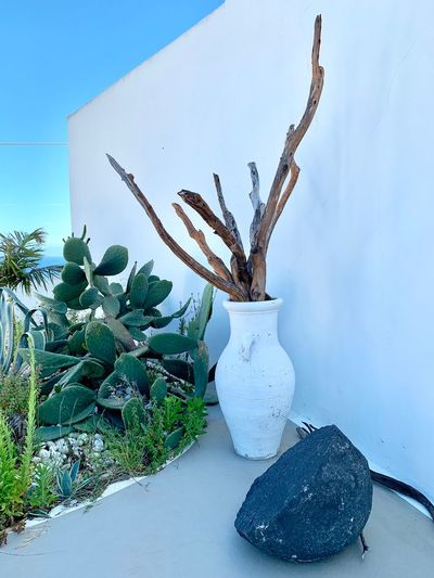 Plant Nature No People Growth Tree Day Cactus Beauty In Nature Snow Decoration Sky Potted Plant Wall - Building Feature Succulent Plant Outdoors Green Color Cold Temperature Winter Blue