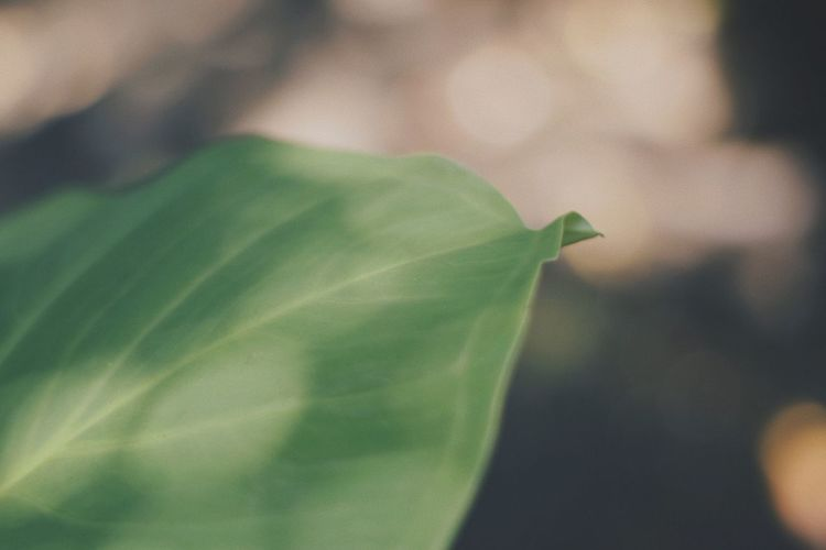 Leaf Green Color Close-up Plant Growth Day Focus On Foreground Nature No People Fragility Outdoors Freshness Beauty In Nature Nikonphotography Nikonphotographer Nikon D3300 Nikon Photography Yongnuo Yongnuo 50mm EyeEmNewHere The Week On EyeEm