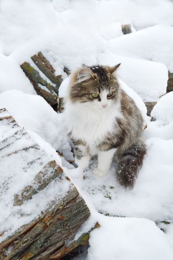 High angle view of cat on snow covered landscape