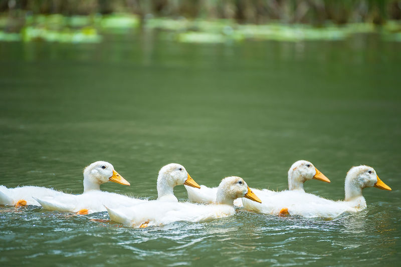 Side View Of Birds Floating In Water
