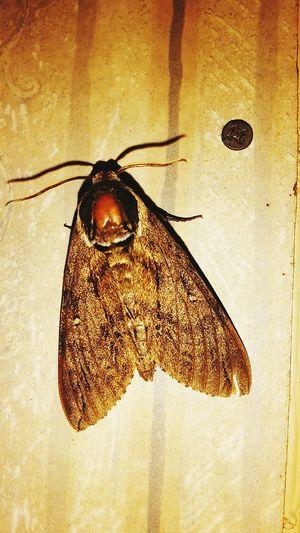 A Bug's Life Moth So Big Taking Photos Nature's Diversities - 2016 EyeEm Awards