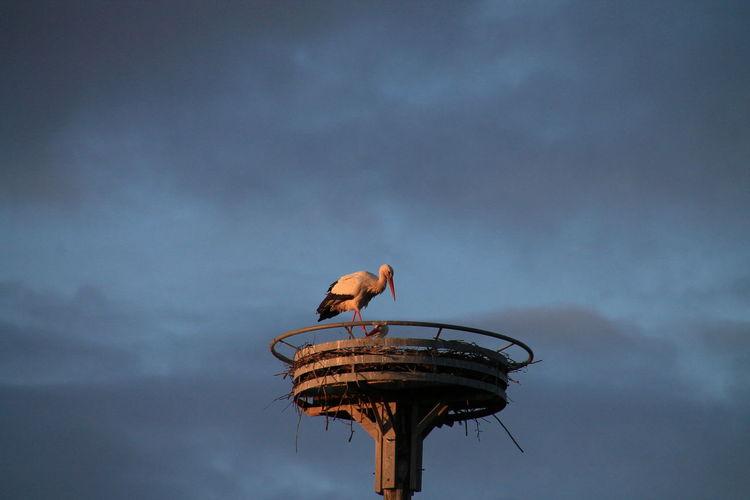 Stork In Nest Against Sky