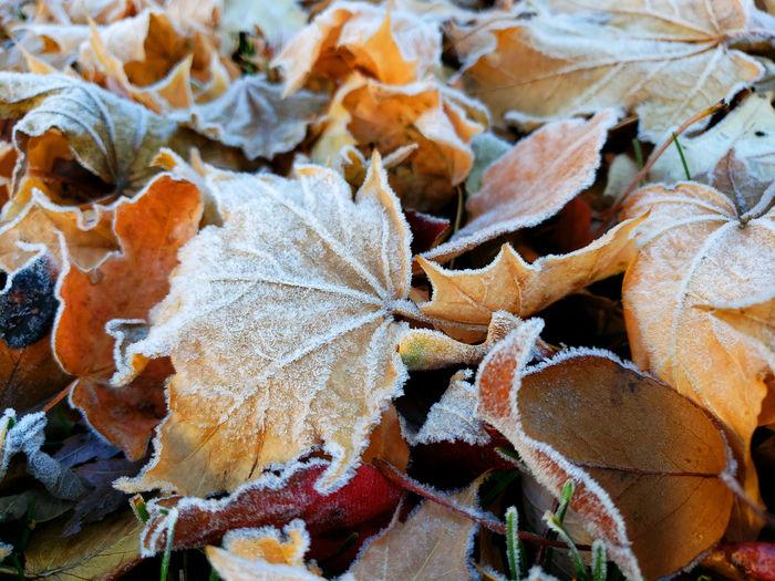 Full frame shot of dry leaves during winter