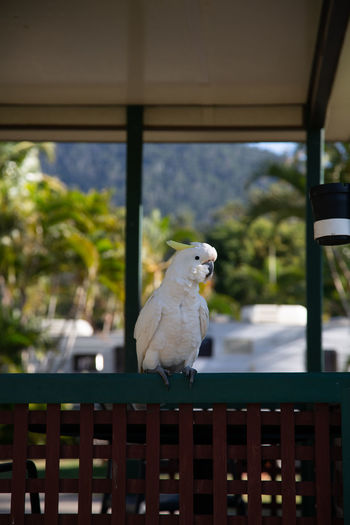 Close-up of parrot perching on railing