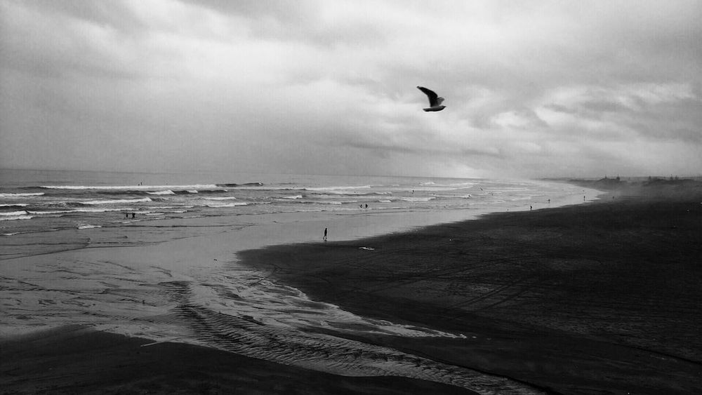 Freedom Sea Beach Sky Horizon Over Water Nature Outdoors Flying One Animal Bird
